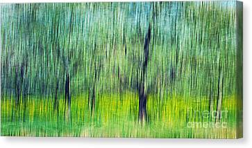 The Orchard Canvas Print by Darren Fisher