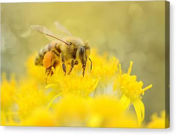 The Pollinator Canvas Print by Fraida Gutovich