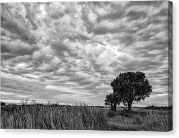 The Right Tree Canvas Print by Jon Glaser