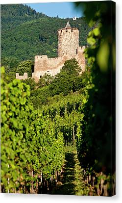 The Ruins Of The Kaysersberg Chateau Canvas Print by Brian Jannsen