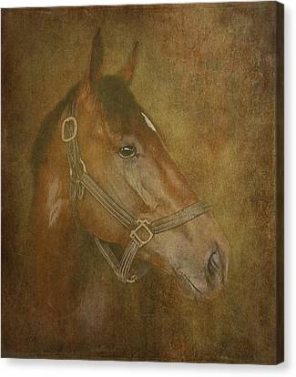 Thoroughbred Canvas Print by Angie Vogel