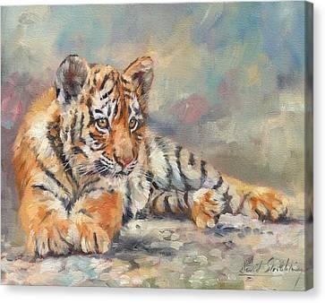 Tiger Cub Canvas Print by David Stribbling