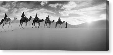 Tourists Riding Camels Canvas Print by Panoramic Images