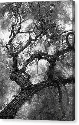 Tree At Berkeley Canvas Print by Ron Regalado