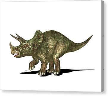 Triceratops Dinosaur Canvas Print by Friedrich Saurer