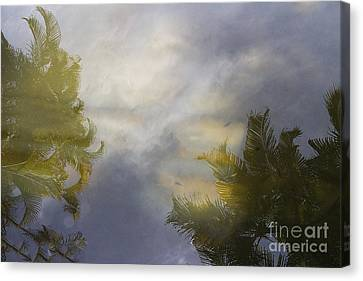 Tropical Reflections Canvas Print by Anne Rodkin