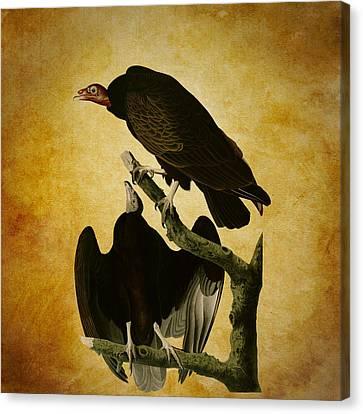 Turkey Buzzard Canvas Print by Sheila Savage