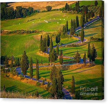 Tuscan Road Canvas Print by Inge Johnsson