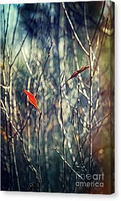 Untitled Canvas Print by HD Connelly