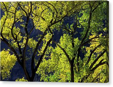 Usa, Utah, Zion National Park, Grotto Canvas Print by Jaynes Gallery