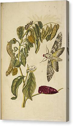 Various Insects Around A Plant Canvas Print by British Library