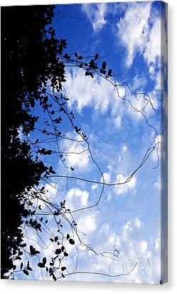 Vine-tangle Canvas Print by Jorgo Photography - Wall Art Gallery