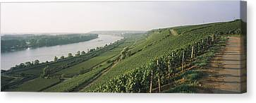 Vineyards Along A River, Niersteiner Canvas Print by Panoramic Images