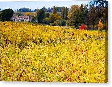 Vineyards In Autumn, Montagne, Gironde Canvas Print by Panoramic Images