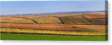 Vineyards In Autumn Near Gleisweiler Canvas Print by Panoramic Images