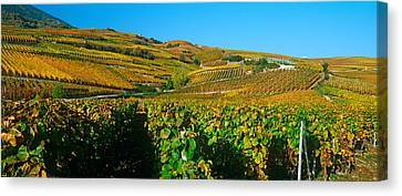 Vineyards In Autumn, Valais Canton Canvas Print by Panoramic Images