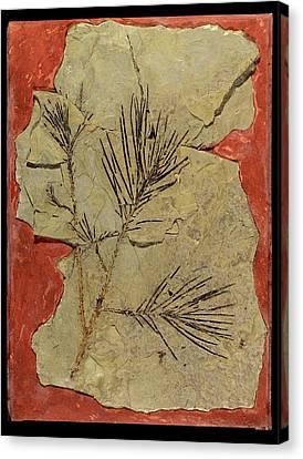Voltzia Conifer Fossil Canvas Print by Gilles Mermet