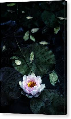 Water Lily Canvas Print by Joana Kruse