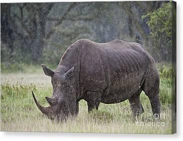 White Rhinoceros Canvas Print by John Shaw