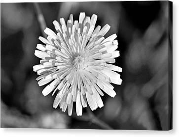 Wild Flower Canvas Print by George Atsametakis