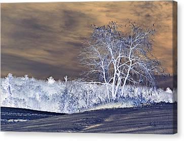 Winter Blues Canvas Print by Susan Leggett