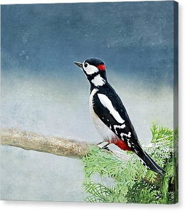 Woodpecker Canvas Print by Heike Hultsch