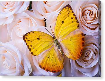 Yellow Wings Canvas Print by Garry Gay