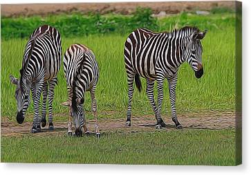 Zebra Family Canvas Print by Dan Sproul