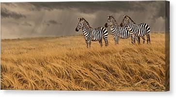Zebra Trio Canvas Print by Aaron Blaise