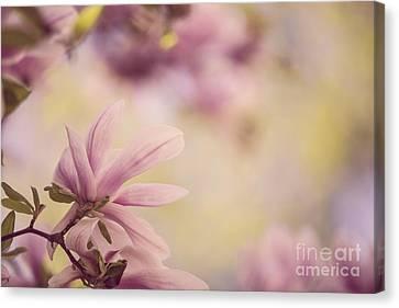 Magnolia Flowers Canvas Print by Nailia Schwarz