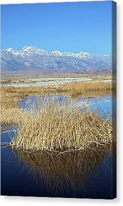 Owens Lake Canvas Print by Jim West