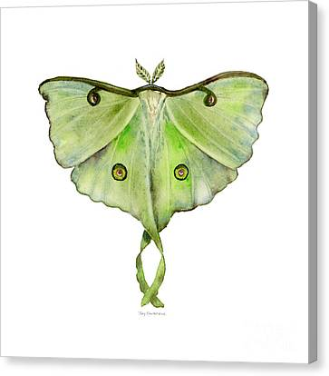 100 Luna Moth Canvas Print by Amy Kirkpatrick