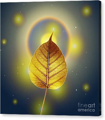 Pho Or Bodhi Canvas Print by Atiketta Sangasaeng