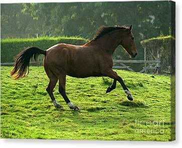 The Bay Horse Canvas Print by Angel  Tarantella