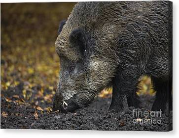 121213p269 Canvas Print by Arterra Picture Library