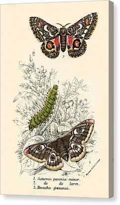Butterflies Canvas Print by English School