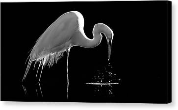 Great Egret Canvas Print by Bill Martin