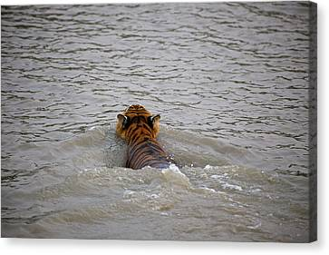 India, West Bengal, Sunderbans National Canvas Print by Connie Bransilver