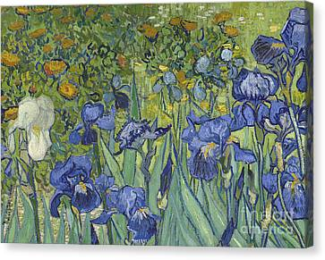 Irises Canvas Print by Vincent Van Gogh