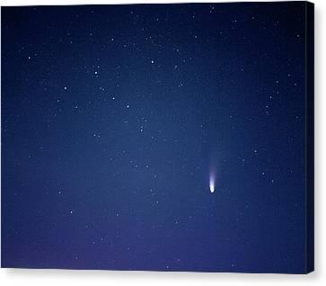 Comet Hale-bopp Canvas Print by Detlev Van Ravenswaay