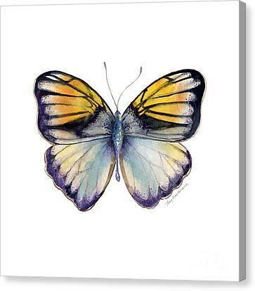 14 Pieridae Butterfly Canvas Print by Amy Kirkpatrick