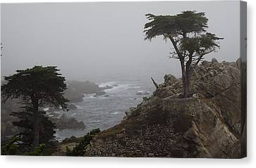 17 Mile Drive Cypress Tree Canvas Print by Linda Aiassa