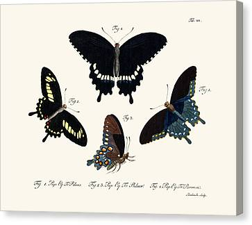 Butterflies Canvas Print by Splendid Art Prints