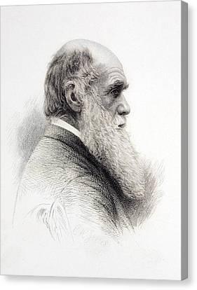 1874 Charles Darwin Fine Engraving Jeens Canvas Print by Paul D Stewart