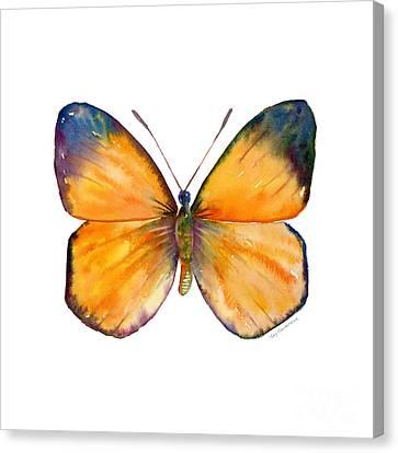 19 Delias Anuna Butterfly Canvas Print by Amy Kirkpatrick