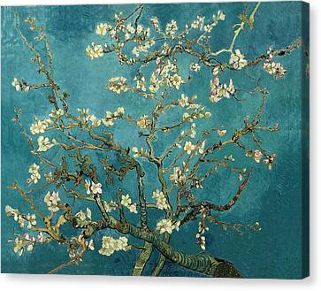 Almond Branches In Bloom Canvas Print by Celestial Images
