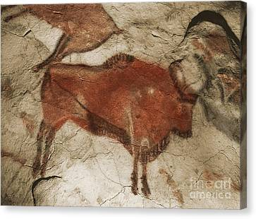 Altamira Cave Paintings Canvas Print by Photo Researchers