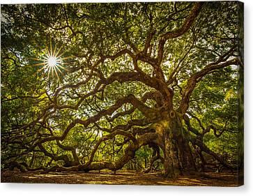 Angel Oak Canvas Print by Serge Skiba