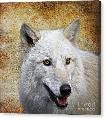 Arctic White Wolf  Canvas Print by Steve McKinzie