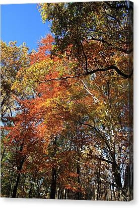 Autumn Trees Canvas Print by Frank Romeo